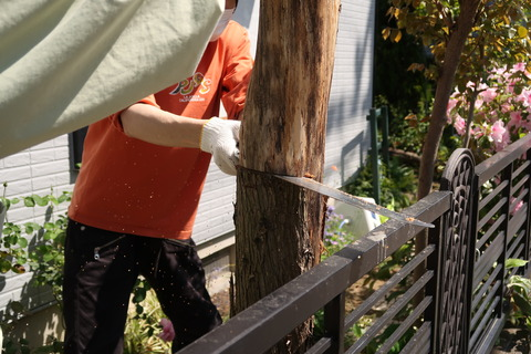 20210422木を切る