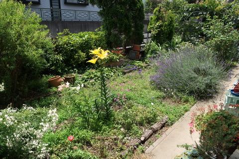 6月22日の庭