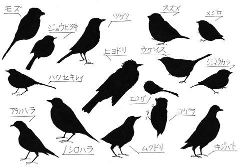 庭に来る野鳥冬の鳥編