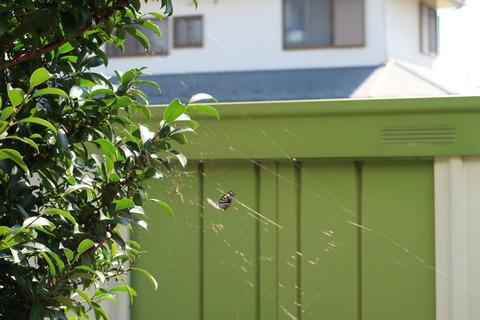 クモの巣をかわす