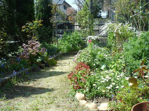 20090409早春の庭