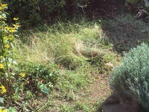 メヒシバの庭