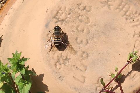 ミツバチの日向ぽっこ