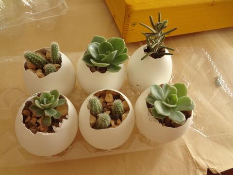 卵に植える20190320