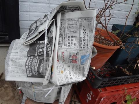 新聞紙でゼラニウム