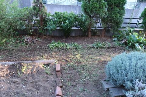 20201002作業後の庭