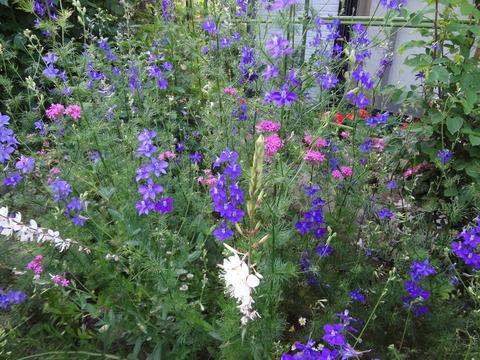 チドリソウを中心の庭