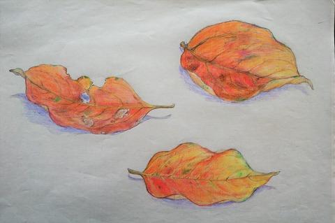 柿の落ち葉2 (2)