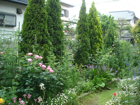20090519バラの庭に