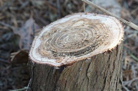 芯が腐った木