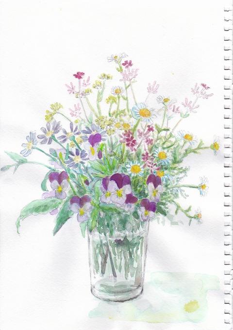 20190206春の花