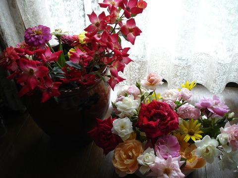 8月26日台風前のバラ