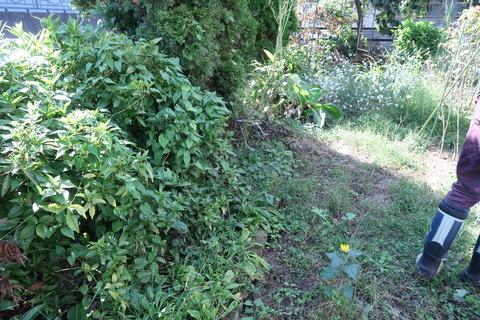 20201002作業前の庭