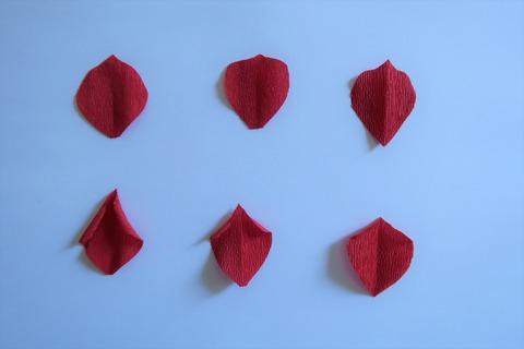 花びらの形の違い (2)
