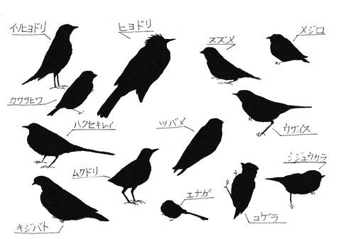 庭に来る野鳥影絵