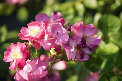 チリチリの花びら