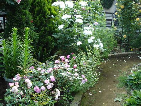 2006年6月3日の庭