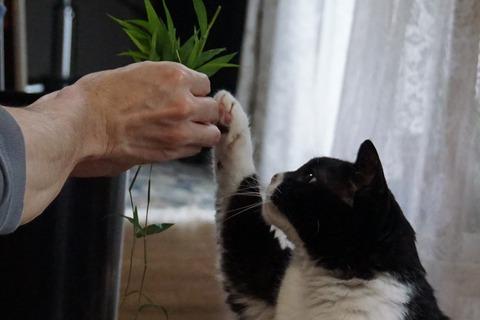 猫草ハムハム