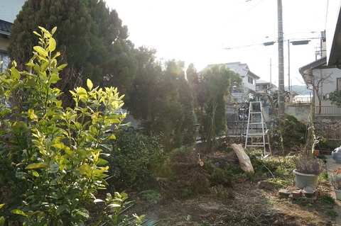 20190222庭木剪定東側