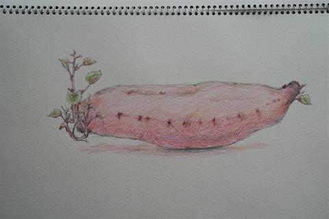 芽の出たサツマイモ