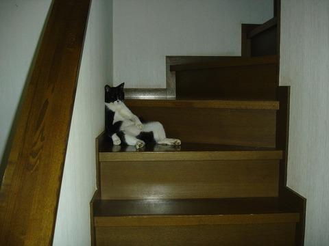 20081028階段で一休み2