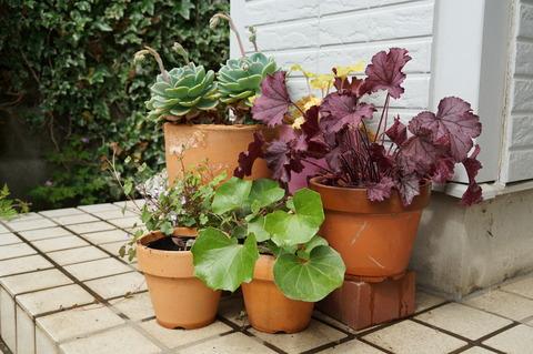 190501玄関前の植物