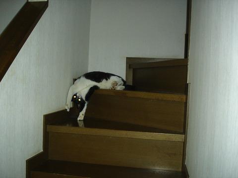 20081003階段の折り方