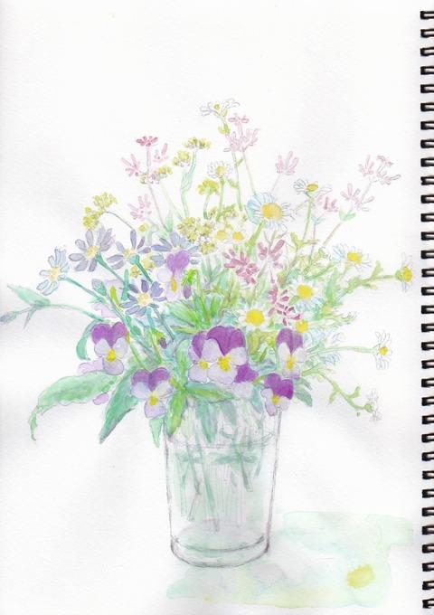20190202春の花_切取色