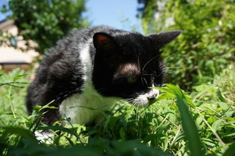 草を食べるソラ