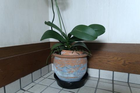 レンガ入りの鉢