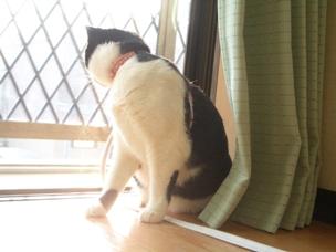 窓の外には