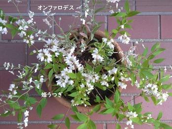 日陰・半日陰で育てている植物 4月・5月