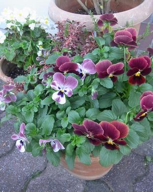 半日陰で育てている植物 11月