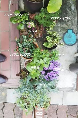 半日陰で育てている植物