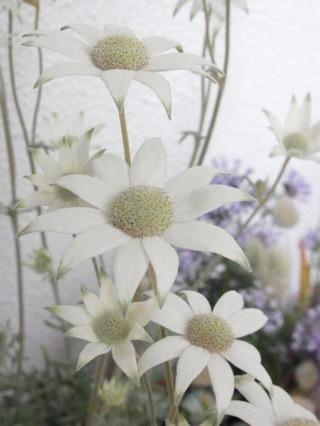酸性土で育てる花