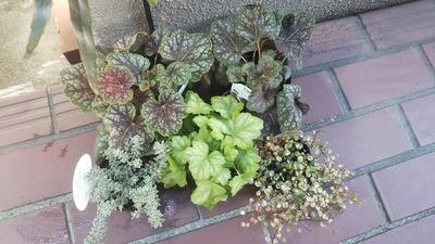 日陰でも育つ植物探し