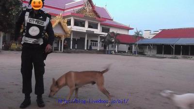 早朝タイのお寺参拝