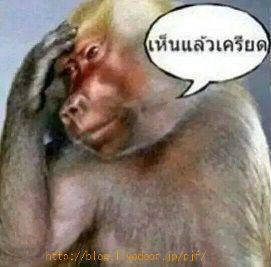 タイの猿(笑)