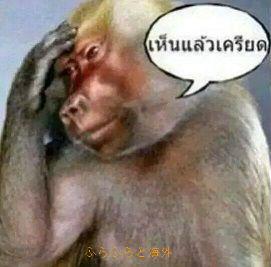 悩む猿(笑)