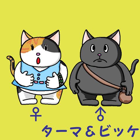 猫オスメスpng