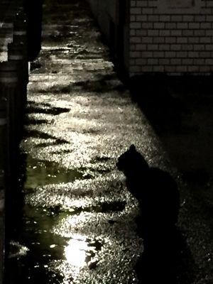 雨宿りしない猫