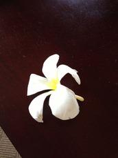 10-7スリランカの花