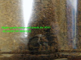 mp-larva