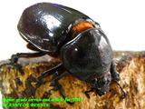 augosomafe60-20-82019