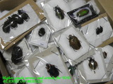 insectspecimen-africa