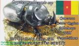 oryctes-card