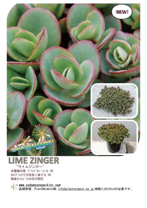Sedum Lime Zinger