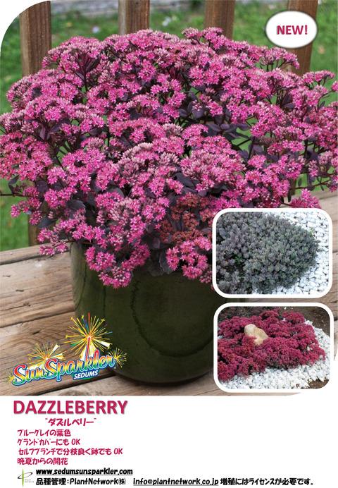 2 Sedum Dazzleberry JP