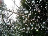 ガラスの森