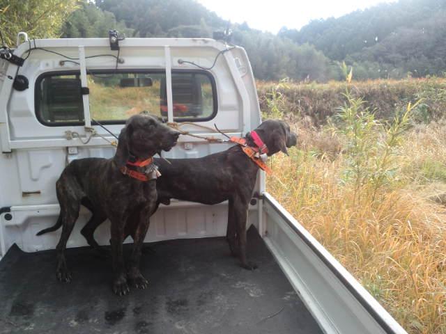 出猟27日目 : 猟犬 プロットハウ...
